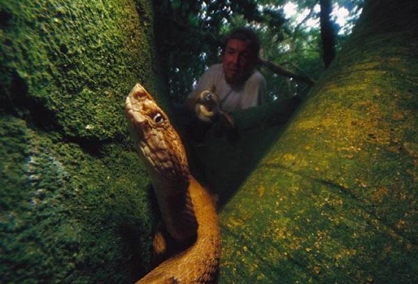 kígyó1