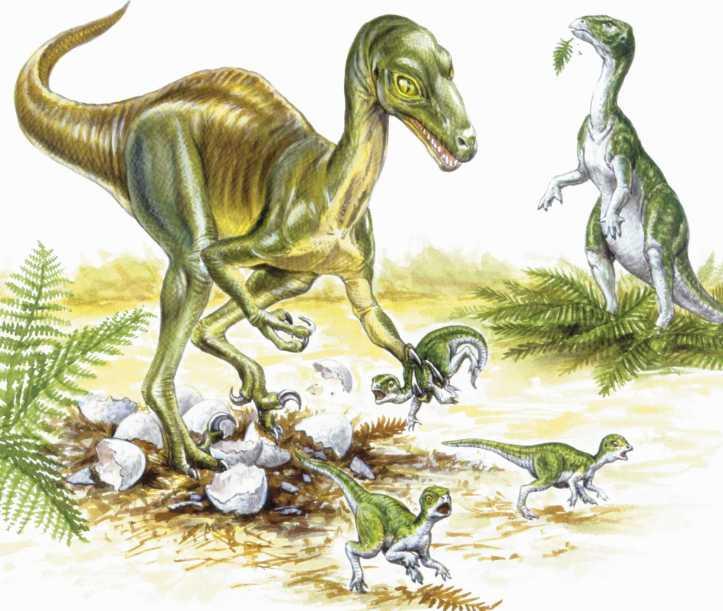 dinotroodon.